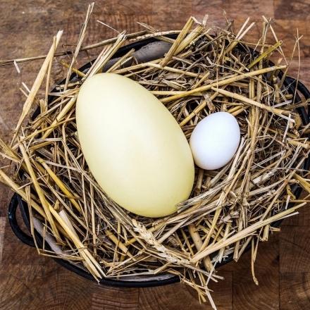 Pštrosí vejce (Nandu) v dárkové krabičce